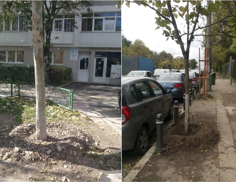 arbori-relocati-2